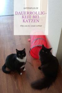 Dauerrolligkeit bei Katzen