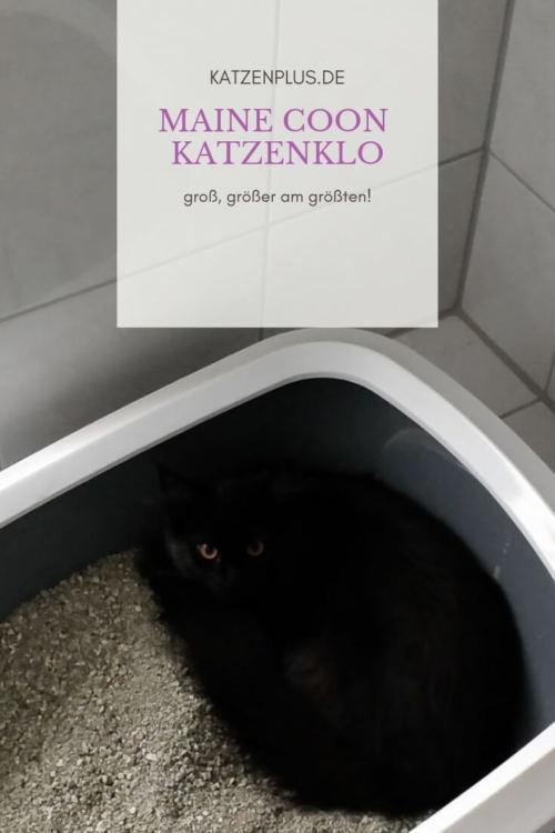 Maine Coon Katzenklo (1)