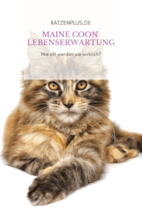 Maine Coon Lebenserwartung