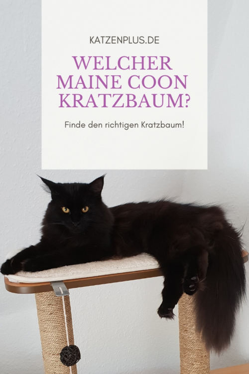 Welcher Maine Coon Kratzbaum