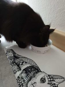 Alle Info's welches Katzenfutter das beste ist, findest du hier!